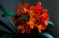 no name ( ID=2276628 ); comments:7