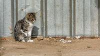 Домашна котка; comments:4