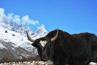 Срещи в Непал; comments:5