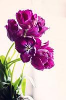 ...purple; comments:4