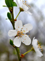 no name ( ID=2280463 ); comments:7
