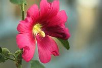 Поздрав от света на цветята; comments:7
