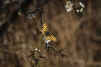 .....пеперудено......; comments:8