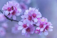 Пролетни нюанси; comments:16