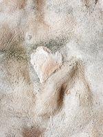Твоето сърце е в моите ръце; comments:11