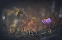Пролетна приказка...; comments:16