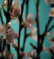Пролет...; comments:12
