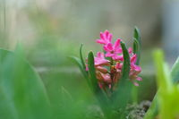 no name ( ID=2282773 ); comments:5