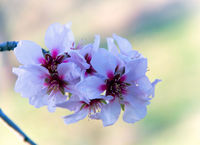 no name ( ID=2282837 ); comments:7