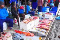Fish market; comments:1