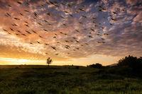 Мигрират птици от душата ми; comments:12