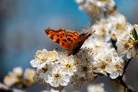 Пролет; comments:6