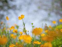 Пролет.; comments:7