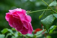 """""""Под дъжда""""; comments:6"""