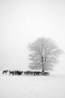 ''Зимни коне'''