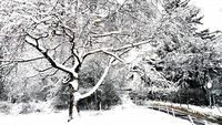 Закъсняла зима...; comments:17