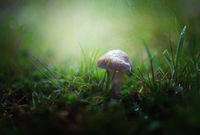 Да пораснеш под дъжда; comments:6