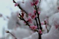 Снежна пролет; comments:2