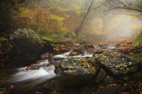За вятъра, реката и една гора...; comments:20