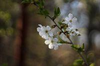 """""""Да, аз заслужавам пролет. Не дължа на никого нищо.""""  - Вирджиния Улф, Писателски дневник  ***; comments:1"""