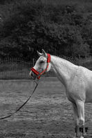 Бяла Красота; comments:2