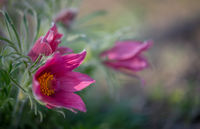 no name ( ID=2284696 ); comments:16