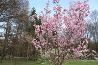 Пролет; comments:2