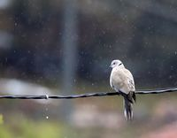 един дъждовен ден; comments:2