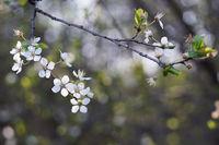 Априлски цъфтежи; comments:4