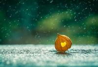 Wet Love; comments:10