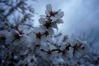 Пролет в с. Маслиново; Няма коментари