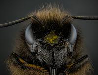 Земна Пчела; comments:1