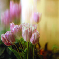 Пролет; comments:7