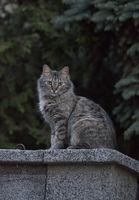 Пазителят на нашата улица(in grey); comments:21