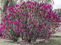 Само цвят лилав!; comments:3