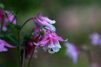 розова нежност; comments:9
