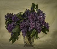 no name ( ID=2290245 ); comments:9