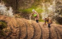 Пролетни Родопи; comments:26