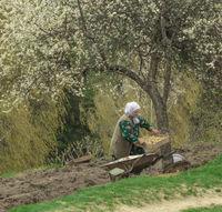 Пролетна сеитба; comments:10