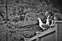 Заедно с птиците; comments:3