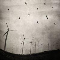 """""""С вятъра, с птиците, с мъглите на залеза"""" ...; comments:15"""