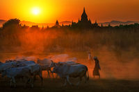 Баган, Мианмар; comments:26