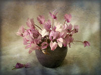 no name ( ID=2292605 ); comments:21