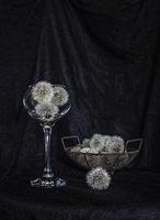 Вино от глухарчета; comments:6