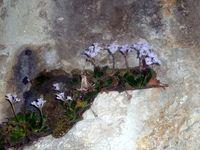 Високо в Родопска скала; comments:11
