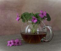 Чаша утринен чай; comments:8