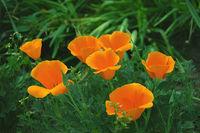 Цветята в моята градина...; comments:11