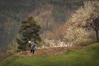 Родопска пролет; comments:10