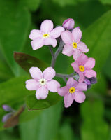 no name ( ID=2293926 ); comments:3