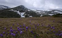 Рилска пролет; comments:10